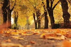 Fall Programs Start